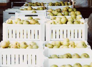 Fruta en cámara de refrigeración