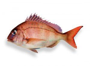 Conservación de pescado fresco y productos del mar