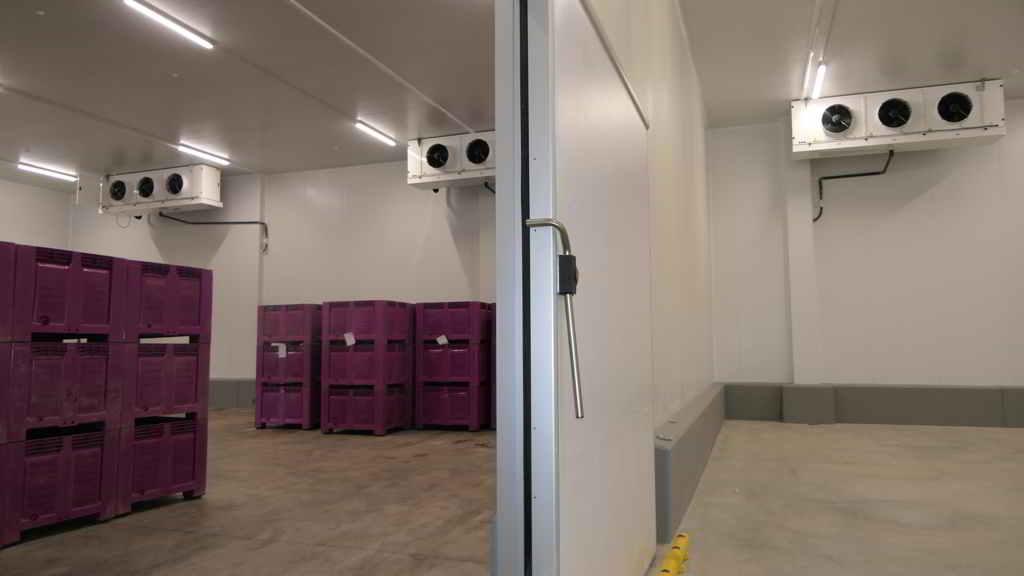 Dos cámaras positivas con refrigeracion Zanotti para frutas y verduras